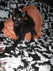 Кошечка Дейзи,  2, 5 мес.