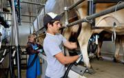 Оплачиваемая студенческая практика на фермах Дании