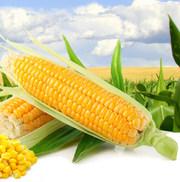 Закупаем дорого кукурузу