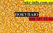 Покупаем кукурузу от 1 тонны.