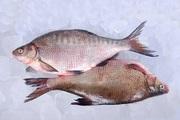 Свіжа риба. Густера,  плотва,  судак,  лящ,  окунь та ін.
