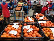 Продаем томаты от производителей