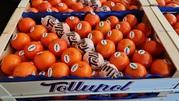 Продаем мандарины от производителей